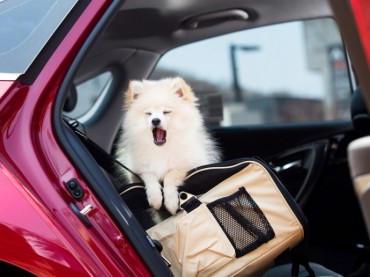 Drivers Say Car Seats for Pets are Most Essential