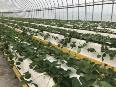 Gov't Develops Smart Greenhouse Technology