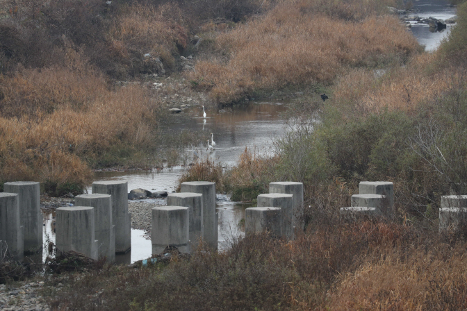A tributary to the Imjin River near the inter-Korean border on Nov. 12, 2019, partly polluted with blood from carcasses of pigs that were culled and poorly handled during an operation to curb the spread of African swine fever (ASF). (Yonhap)