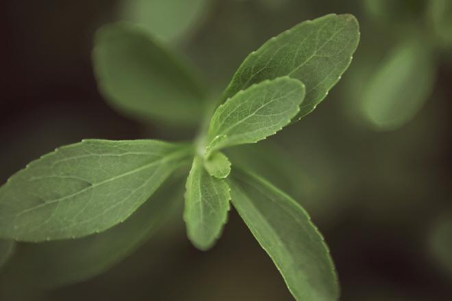 PureCircle's Latest Stevia Leaf Development Offers Significant Productivity Advantages
