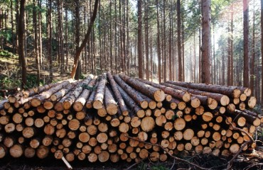 Majority of S. Koreans Agree on Deforestation Policy Prioritizing Environmental Issues