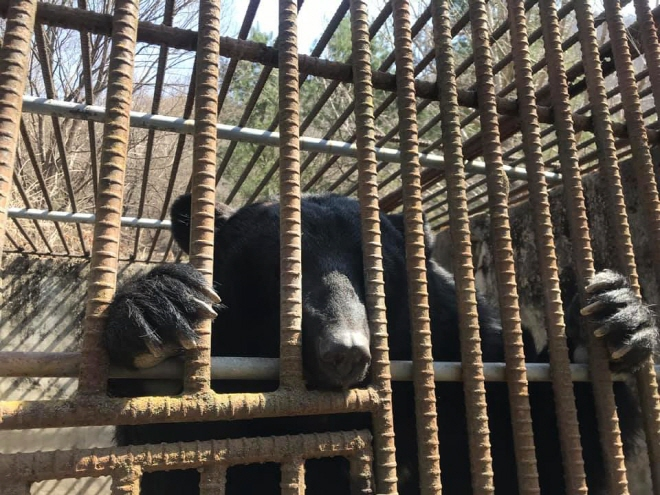 Animal Rights Group Urges National Assembly to Fund Bear Shelter