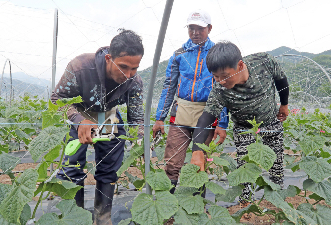 Foreign Seasonal Workers Offset Labor Shortage in Agricultural and Fisheries Industry