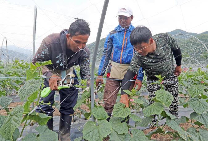 Farm Crisis Brewing as Coronavirus Fears Keep Migrant Workers Away