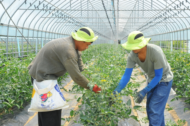 S. Korea Seeks to Extend Foreign Workers' Stay Permits to Cope with Seasonal Labor Shortage