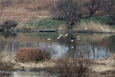 S. Korea to Designate Jangrok Wetlands as Country's First Urban Wetland