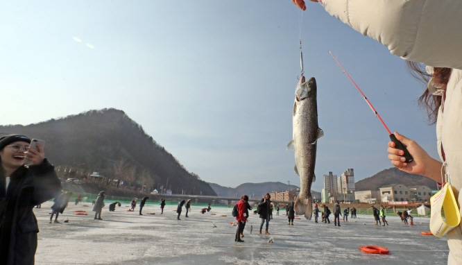 Hwacheon Ice Fishing Festival Reopens to Foreigners