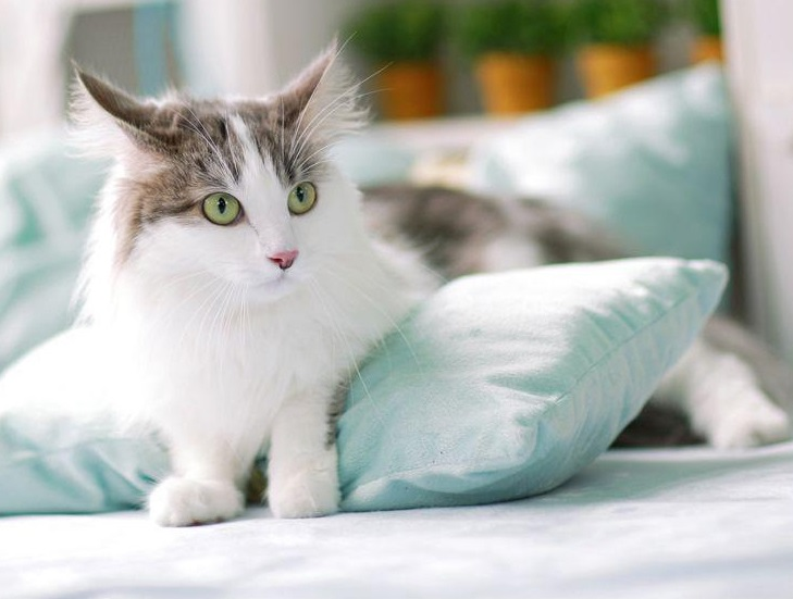 S. Korea Expands Registration for Pet Cats