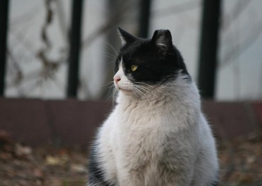 Number of Stray Cats in Seoul Drops as Neutering Project Proves Effective