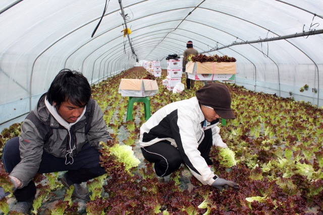 S. Korea Facing Critical Shortage of Farm Laborers as Coronavirus Disrupts International Travel