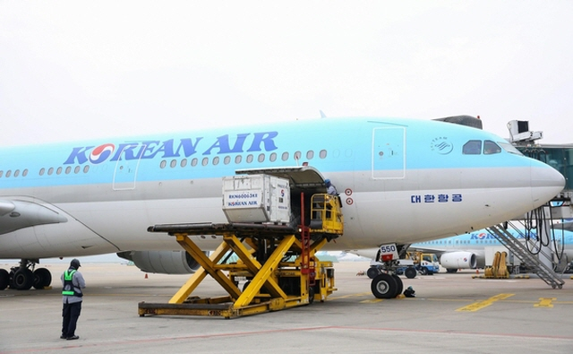 Korean Air Uses Passenger Jets as Cargo Carriers amid Virus Woes