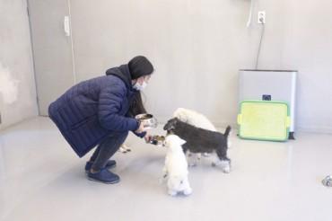 Seoul's Seocho Ward to Provide Dog Care for Coronavirus Patients