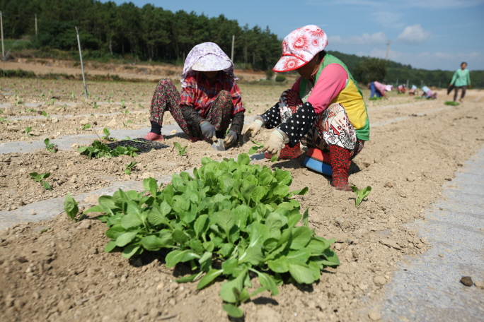 Rural Population Aging Rapidly in S. Korea