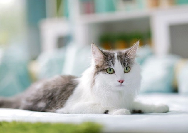 Genetic Markers Used to Find Lost Cats