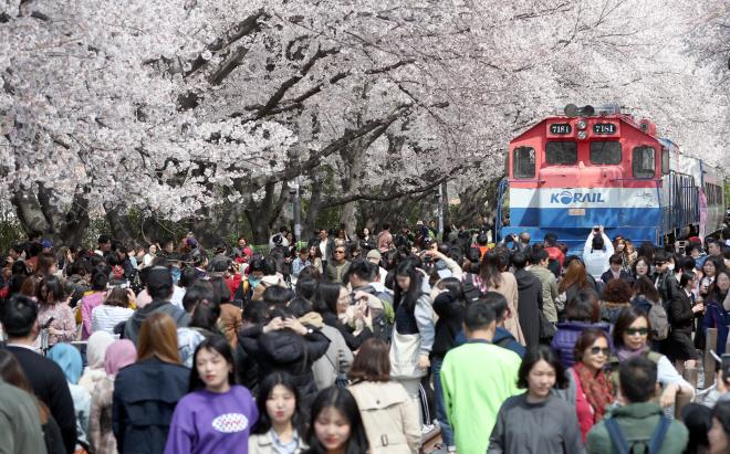 Key Spring Blossom Festivals Canceled over Coronavirus Outbreak