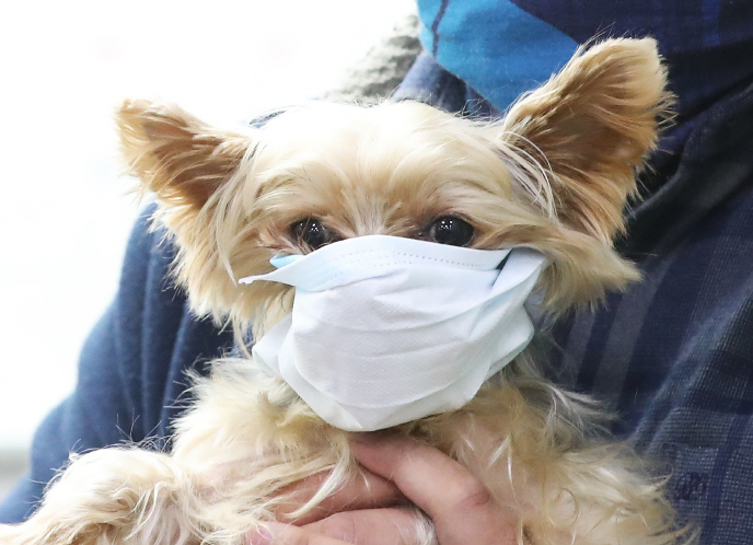 Pet Owners on Alert Following News of Human-to-Animal Virus Transmission
