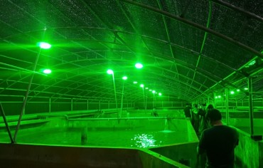 Researchers Discover LEDs Stimulate Halibut Growth