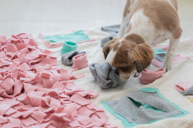 Less Feed and More Playtime Prevent Pets from Indoor Sickness