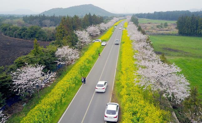 Noksan Road on Jeju Island. (Yonhap)