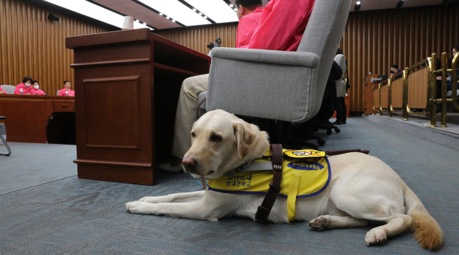 Joy, the guide dog of Kim Ye-ji, who was then a candidate of the minor opposition Future Korea Party for the April 15 parliamentary elections. (Yonhap)