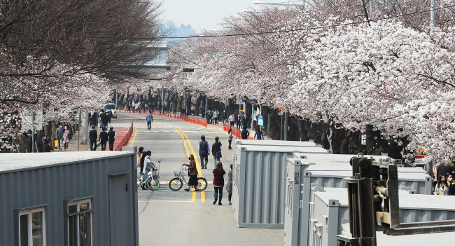 People enjoy cherry blossoms on Yeouido in Seoul on April 1, 2020. (Yonhap)
