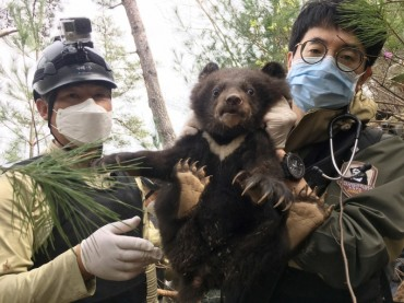 Three New Bear Cubs Born at Mount Jiri