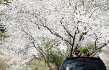 S. Koreans Go for Video Tours, Drive-thru Viewing, Flower Delivery to Savor Spring Blossoms amid Pandemic