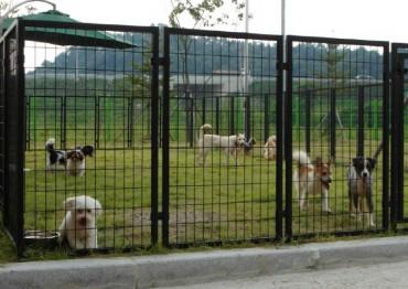 Gyeonggi's Nanum Center Sends Away 1,500 Dogs for Adoption