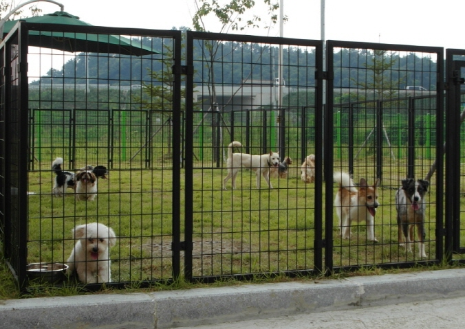 Gyeonggi's Nanum Center Sends Away 1,500 Dogs for Adoption