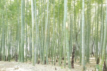 Study Highlights Potential of Bamboo in Carbon Sequestration