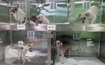 Chuncheon Establishes Shelter for Abandoned Animals