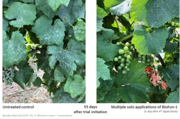 Biotalys' First Biocontrol Proves Consistent, High Efficacy in Global Fruit and Vegetables Field Trial Program