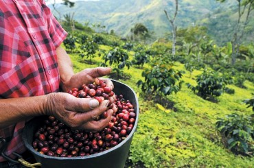 S. Korea to Establish Sustainable Coffee Farm in Ethiopia