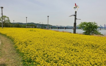 Seoul City to Donate Agricultural Crops Cultivated at Han River Parks