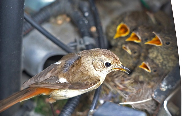 Bird Nest Discovery in Unusual Locations Gains Attention