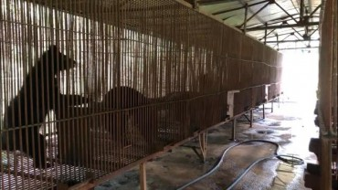 U.S. Sanctuary to Welcome 22 Bears Rescued from S. Korean Bear Farms