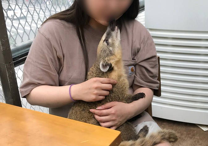 Exotic Animal Cafes Back in Spotlight over Virus Risk