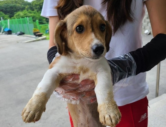 Some pets are abandoned because the owners fail to find someone to care for them while they are away for a long time. (image: Ministry of Agriculture, Food and Rural Affairs)