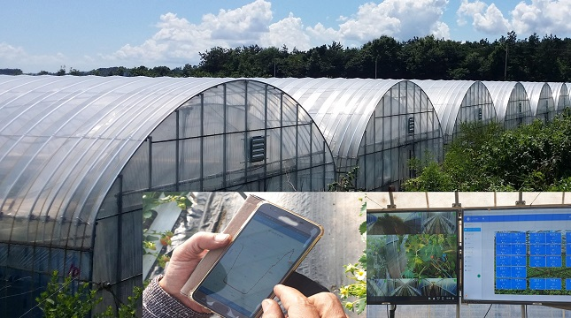 Smart Farm Tech Boosts Productivity at Small Greenhouses