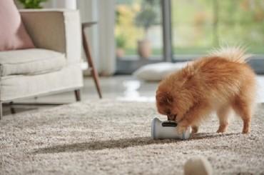 LG Uplus Promotes Adoption of Abandoned Animals via Smart Pet Care