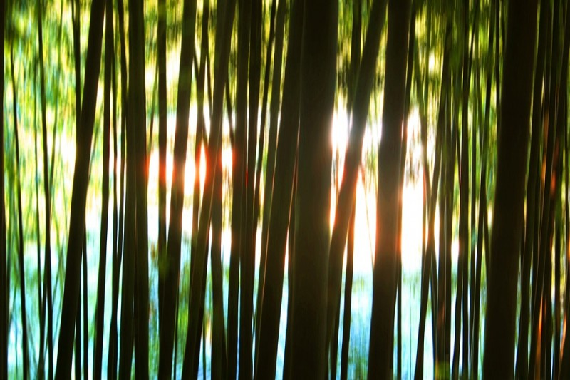 Damyang's Iconic Bamboo Cultivation System Wins Global Recognition