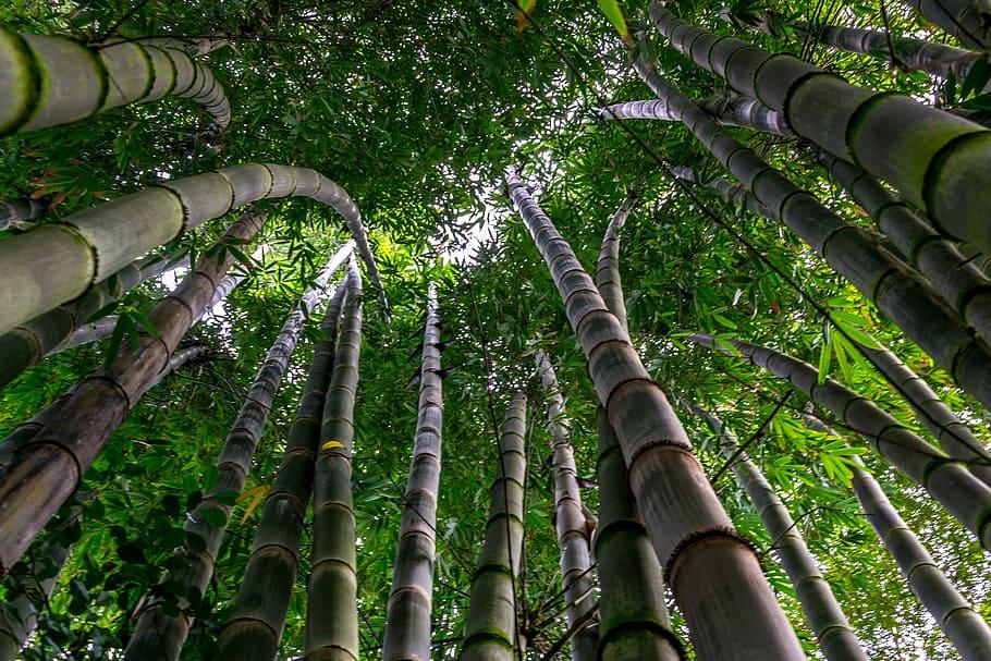damyang bamboo2