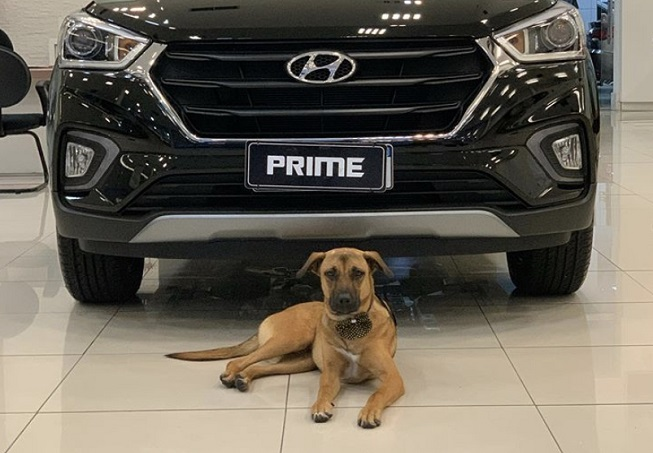 The dog was named after Hyundai Motor's Tucson SUV. (screenshot of Tucson Prime's Instagram account)