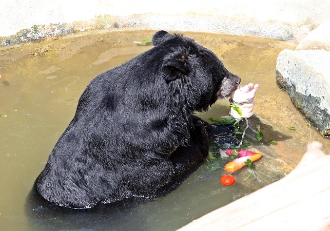 In the summer, artificial ponds are refilled every day to help animals cool down. (Yonhap)