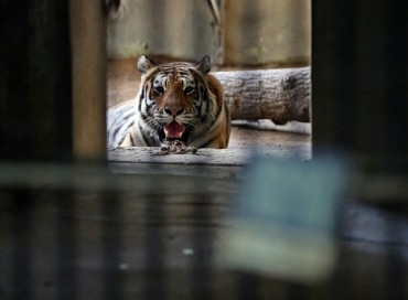 Zoos Struggle with Scorching Summer Heat