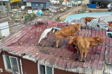Cows Found on Rooftops After Flood Sweeps Through Village