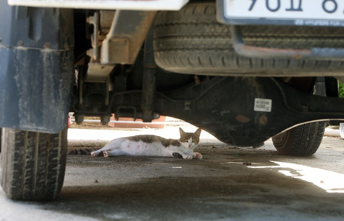 Man Fined for Neglecting Some 30 Cats in Tiny, Dirty Home
