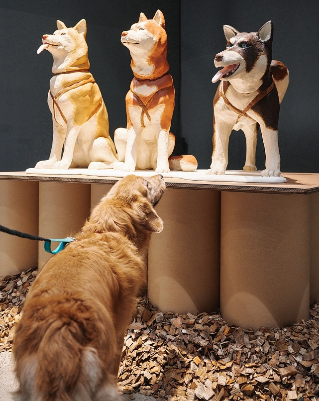 """This photo provided by MMCA on Sept 21, 2020, shows """"Togo and Balto,"""" a sculpture piece by Chung Yeon-doo, featured at a special canine-themed exhibition titled """"A Museum For All, A Museum For Dogs"""" at the museum's gallery in Seoul."""
