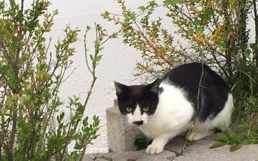 Students Begin Online Fundraiser to Save Stray Cats