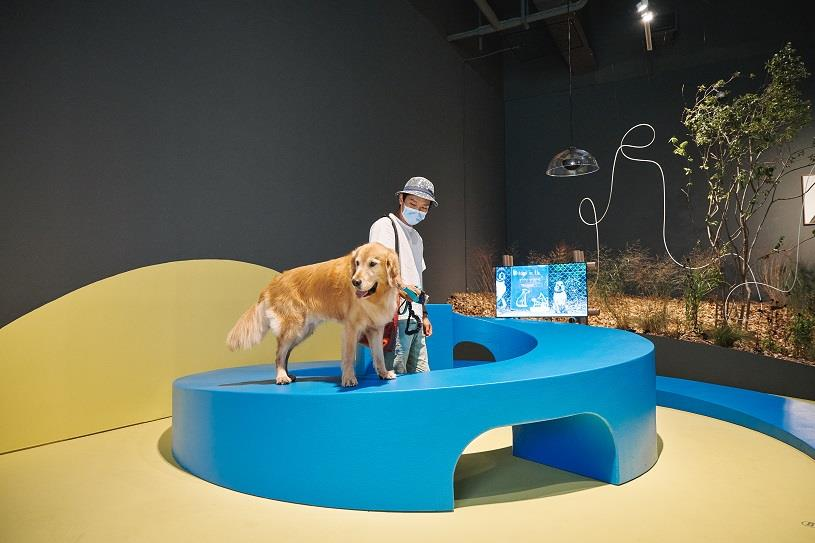 """This photo provided by MMCA on Sept 21, 2020, shows an installation art piece featured at a special canine-themed exhibition titled """"A Museum For All, A Museum For Dogs"""" at the museum's gallery in Seoul."""